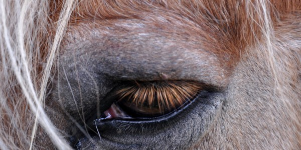 Pferde leiden Stumm