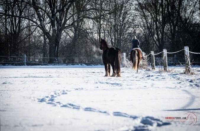 Knackende Gelenke beim Pferd