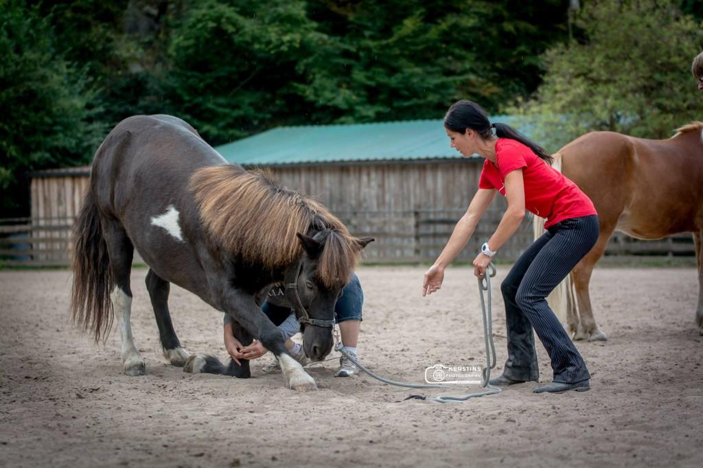 Schülerin und ihr Pferd beim Einüben des Kompliments