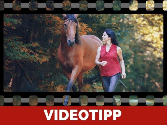 Quicktipp_sandra_Fencl_zum_Thema_Freiarbeit_mit_Pferden