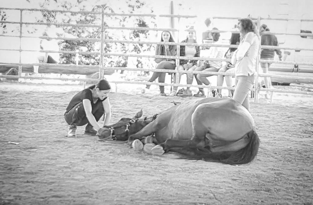 Nur wenn sich ein Pferd mit uns wirklich wohl und sicher fühlt, wird es beispielsweise in fremder Umgebung uns vollkommen vertrauen und sich - wie hier zB - sogar flach neben uns hinlegen...
