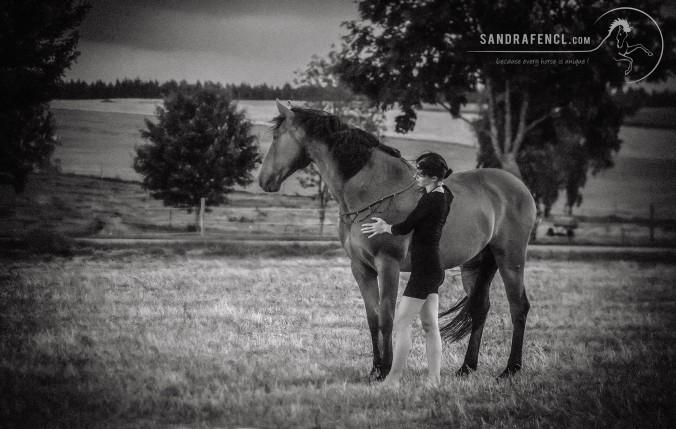 Nur wenn wir Pferde in ihrer Ganzheitlichkeit verstehen, ist eine tiefe Verbindung zwischen Mensch und Pferd möglich.