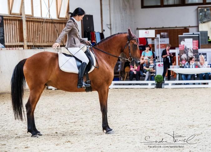 Spätestens am Turnier zeigt sich, wie viel innere Ruhe ein Pferd-Reiter-Paar wirklich hat.