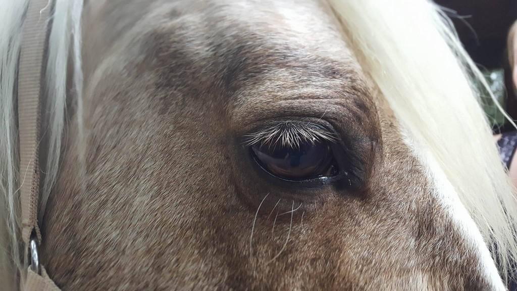 Das Auge eines Therapiepferdes - VOR der Behandlung