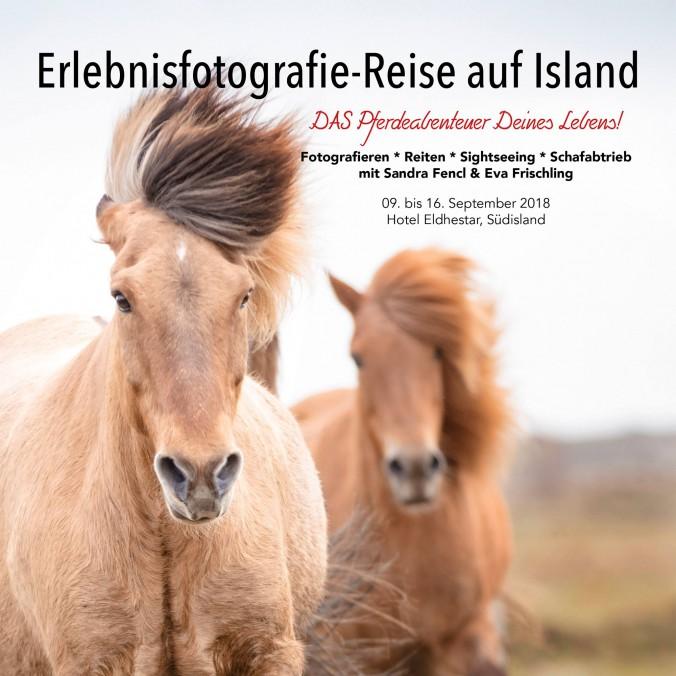 Reiten, Fotografieren, Sightseeing, Schafabtrieb! DAS Pferdeabenteuer deines Lebens!