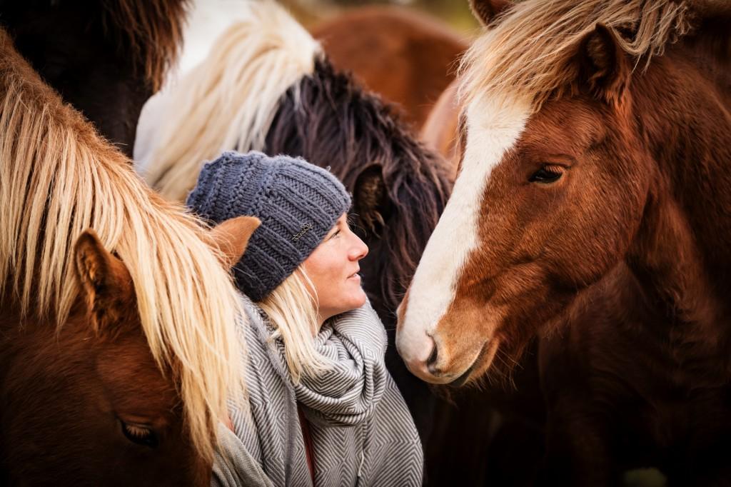 Inmitten einer Islandpferdeherde