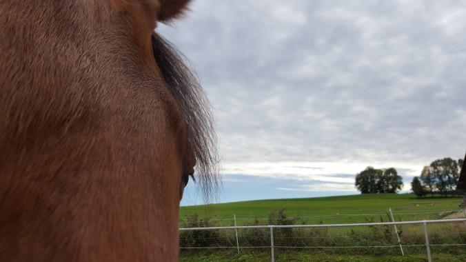 Warum man Pferde ohne Erwartungshaltung trainieren sollte