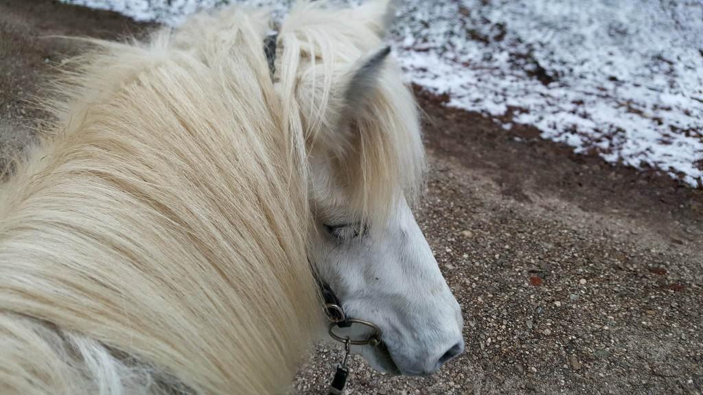 Auch wenn ein Pferd länger krank oder lahm war, ist es wichtig, nach vorn zu schauen.