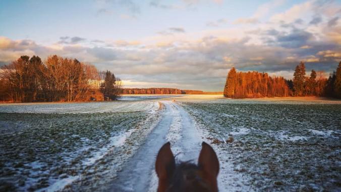 pferd aggresiv im winter auf andere pferde