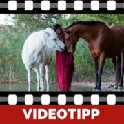 Pferdepsychologie Warum typgerechte Ausbildung wichtig ist-2