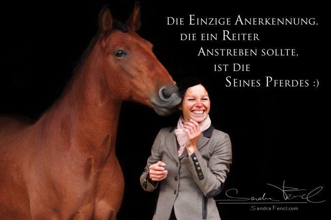 Pferde richtig trainieren