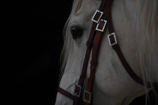 Wir können nur Pferde in Balance bringen, wenn wir selbst in Balance sind.
