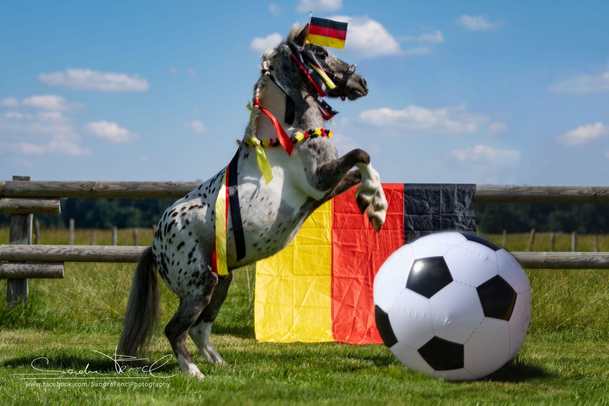 Warum Fussi auch Pferde & Reiter inspirieren kann :)