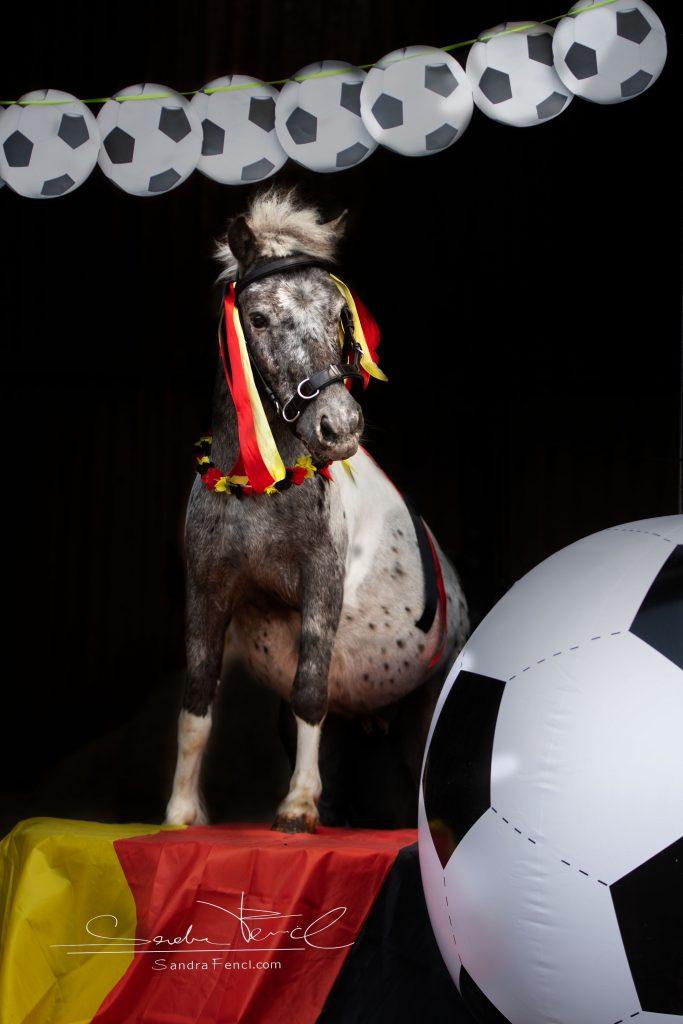 Wenn Du ein guter Coach für Dein Pferd oder Pony bist, könnt Ihr gemeinsam Großes erreichen :)