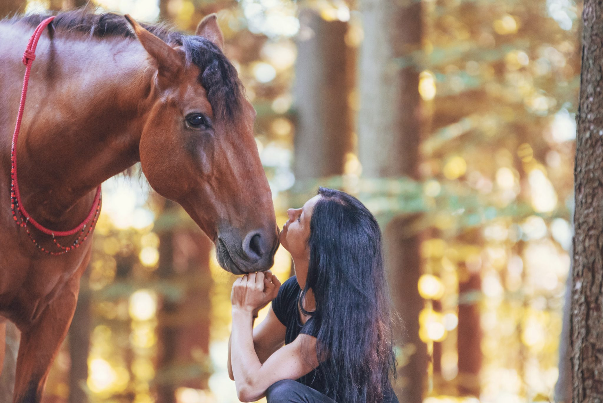 Seinem Pferd zuzuhören ist wichtig beim Training. Foto: Svenja Sommer