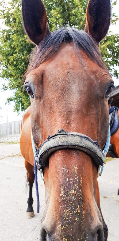 Pferdetraining_Bayern