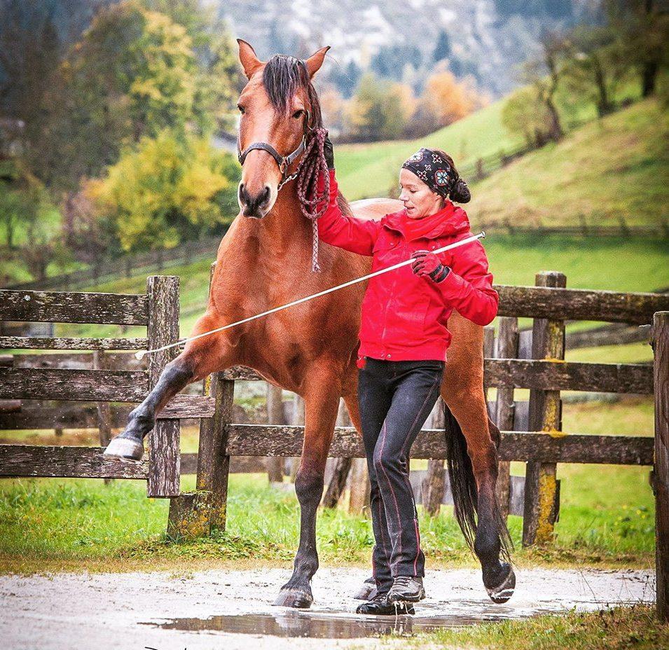Mein Rufino - ein stolzes, aber kein einfaches Pferd :)