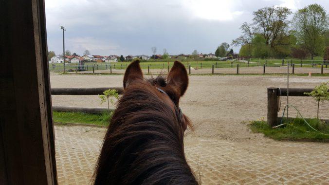 Pferdegerechtes Training bedeutet auch faire Konsequenz und Konzentration des Reiters.
