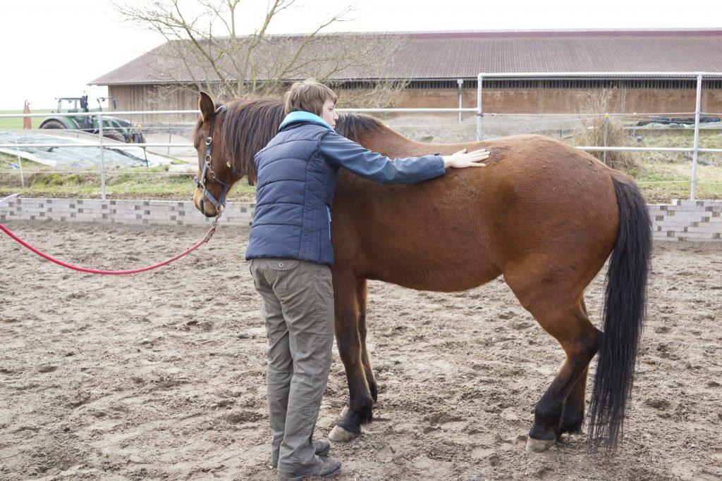 Strömen für Pferde Bayern