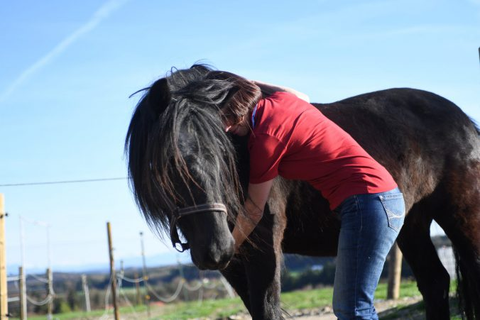 Die Pferde LIEBEN Jin Shin Jyutsu!