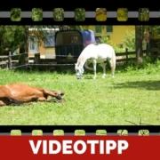 Unmotiviertes Pferd