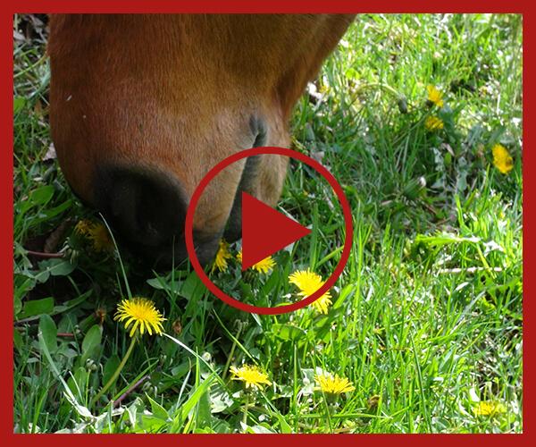 Videoseminar_Pferdefütterung