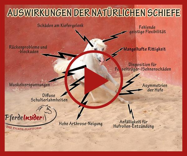 Videoseminar_Schiefe_des_Pferdes