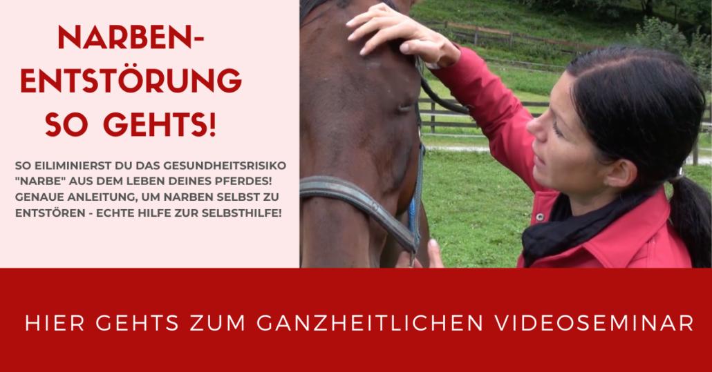 Narbenentstörung selbst lernen! Videoseminar mit Sandra Fencl