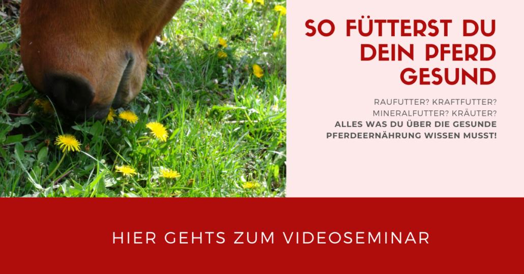 So fütterst Du Dein Pferd gesund! Videoseminar mit Sandra Fencl