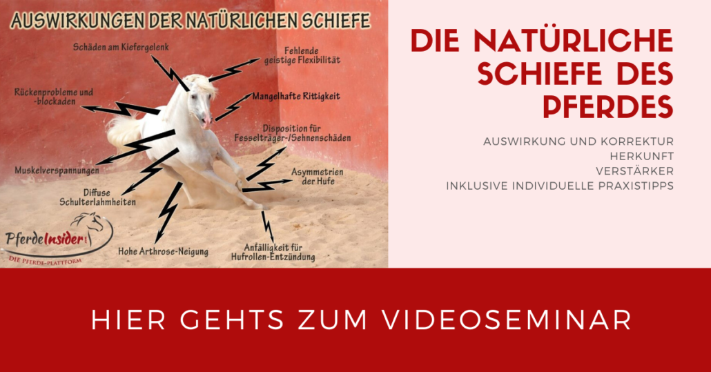 Die natürliche Schiefe des Pferdes und Bodenarbeit! Videoseminar mit Sandra Fencl