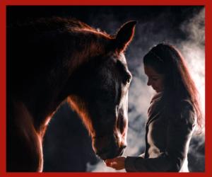 Gratis Live-Webinar: So bildest Du Dein Pferd gesundheitsfördernd aus!