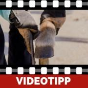 5 Gründe warum Barhufpferde gesünder leben