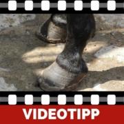 5 Gründe warum zu lange Zehen schädlich für Dein Pferd sind