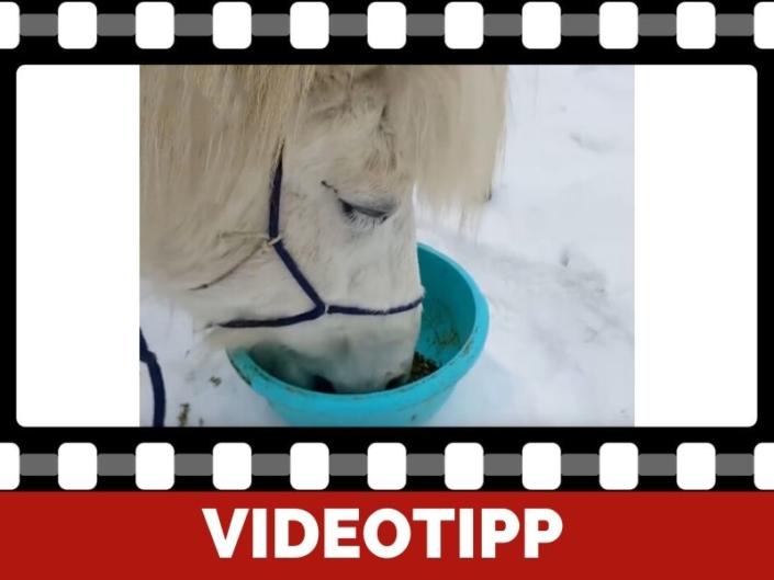 DIY Mit gesundem selbstgemachten Mash Pferde in der Kälte unterstützen