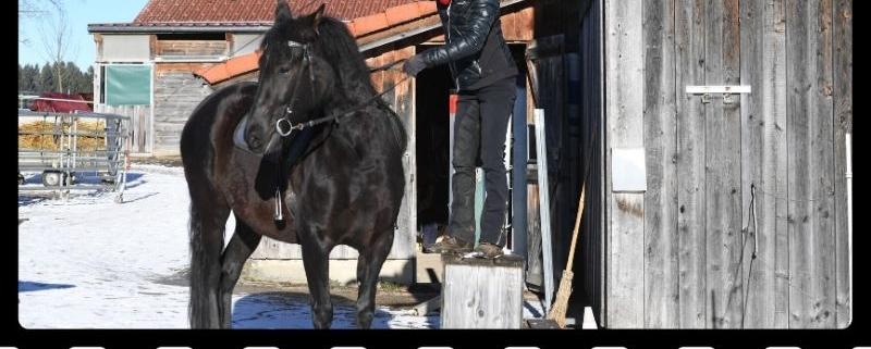 Deshalb sollte jeder mit Aufstiegshilfe aufs Pferd