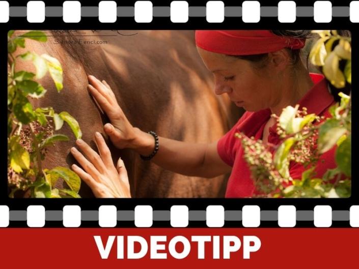 Einfache Pferdemassage für mehr Pferdegesundheit