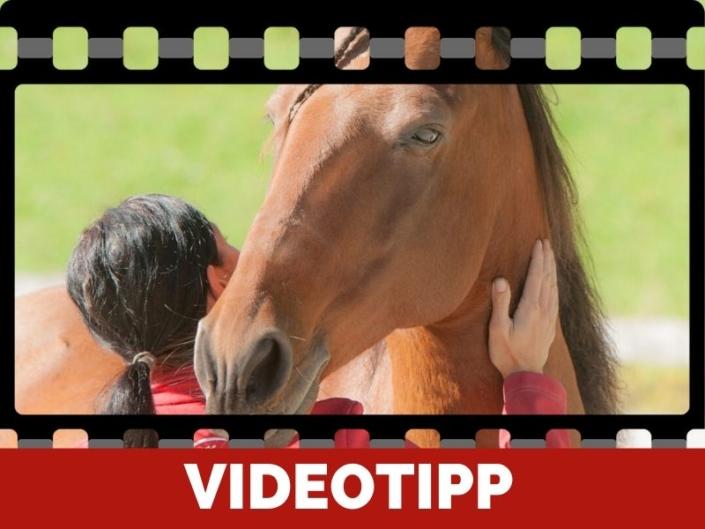 Ganzheitliches Pferdewissen ist wichtig