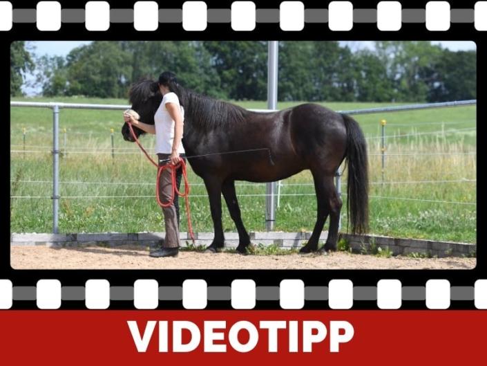 Konsequenz in der Pferdeerziehung für Harmonie zwischen Pferd und Reiter