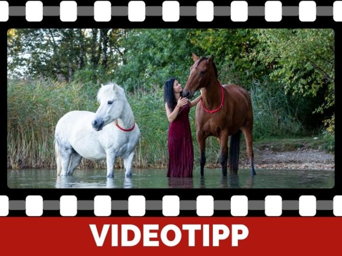 Pferdetraining Ganzheitlich gymnastisch wertvoll und mit Spaß