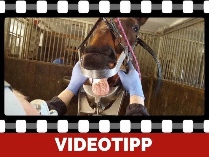 Pferdezahn Behandlung für dich mitgefilmt