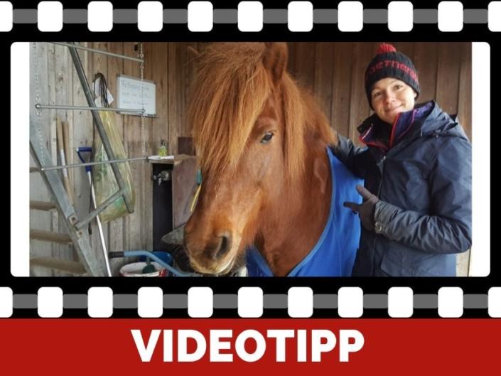 QuickTipp Verschwitztes Pferd nach dem Training So vermeidest Du Erkältungen
