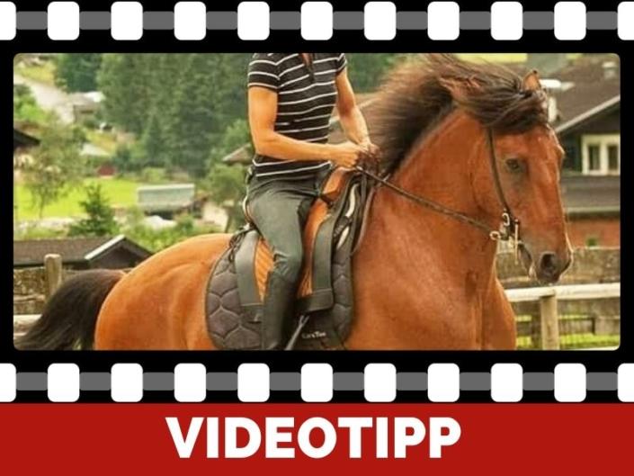 Reitergewicht bin ich zu schwer für mein Pferd