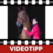 Richtiges Pferdetraining Vertrauen und Respekt