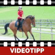 Richtiges Pferdetraining falsche Bestärkung
