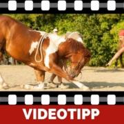 Zirzensische Gymnastik Sinnvolles Training für jedes Pferd
