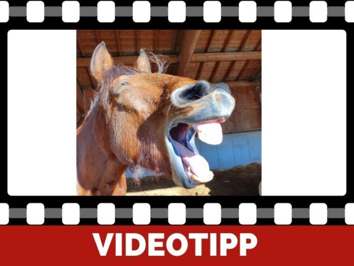 häufiges gähnen des Pferdes im Training was bedeutet das