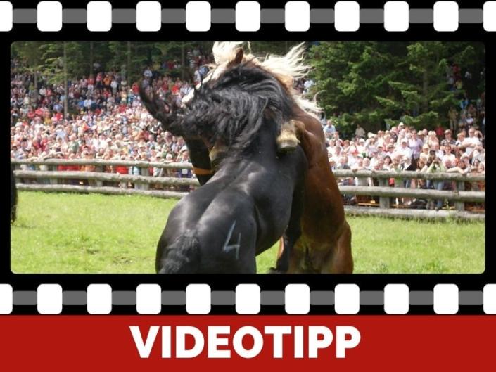 was tun bei aggressiven Pferden