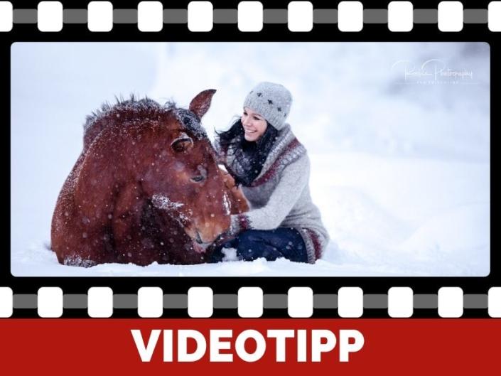 zirzensische Lektion so bringst du deinem Pferd das Hinlegen durch Imitation bei
