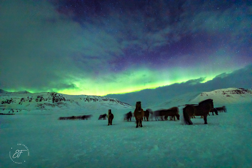 Nordlichter auf Island: Islandreise mit Sandra Fencl