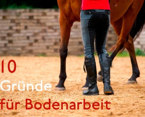 10 Gründe für Bodenarbeit mit dem Pferd und Tipps fürs Pferdetraining am Boden